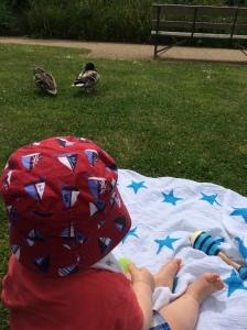 Watching the ducks!